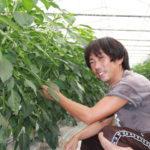 ふるさと納税生産者インタビュー:田畑智也さん(ピーマン)
